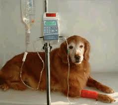 chemotherapy-for-dogs